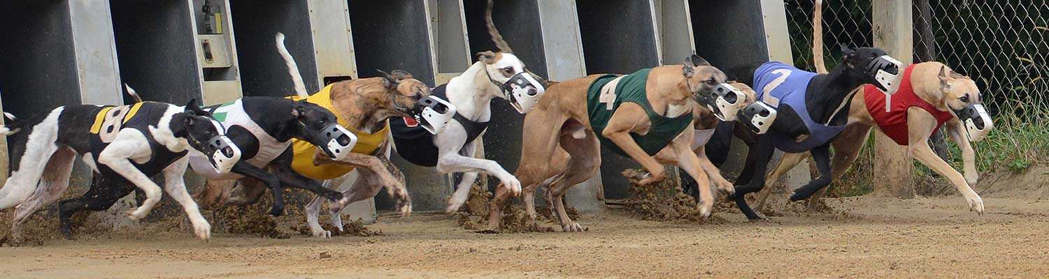 how to wager dog racing