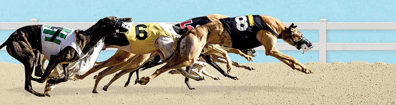 dog racing promotions