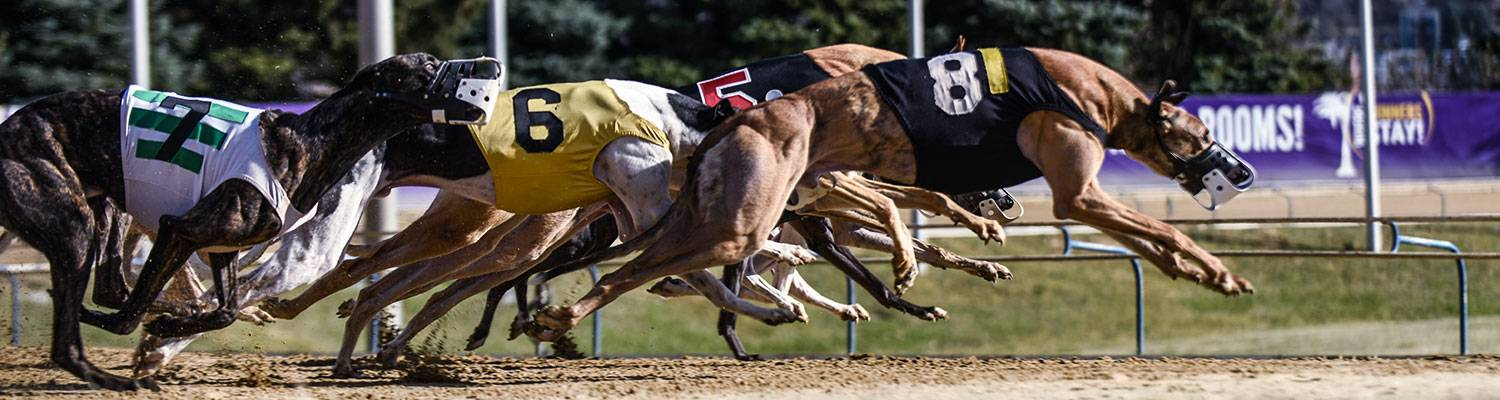 greyhound racing west virginia