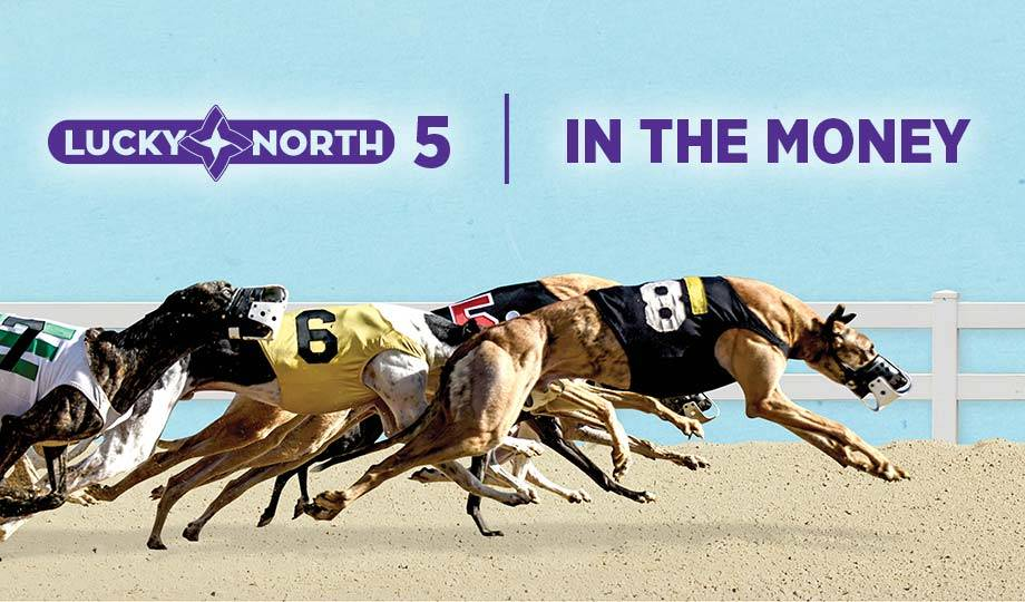 lucky north greyhound racing